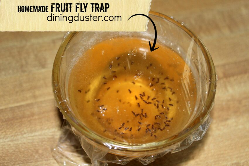 Get Rid Of Pesky Fruit Flies Fruit Fly Trap Dining Duster